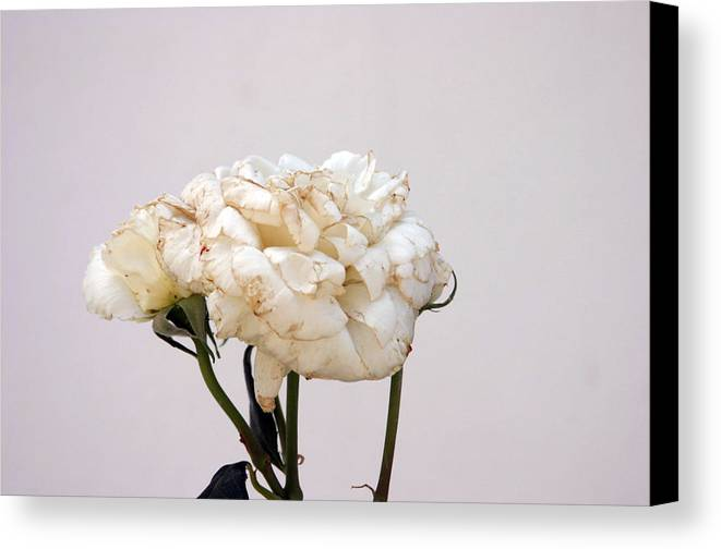 Photographer Canvas Print featuring the photograph Cherin 11 by Jez C Self