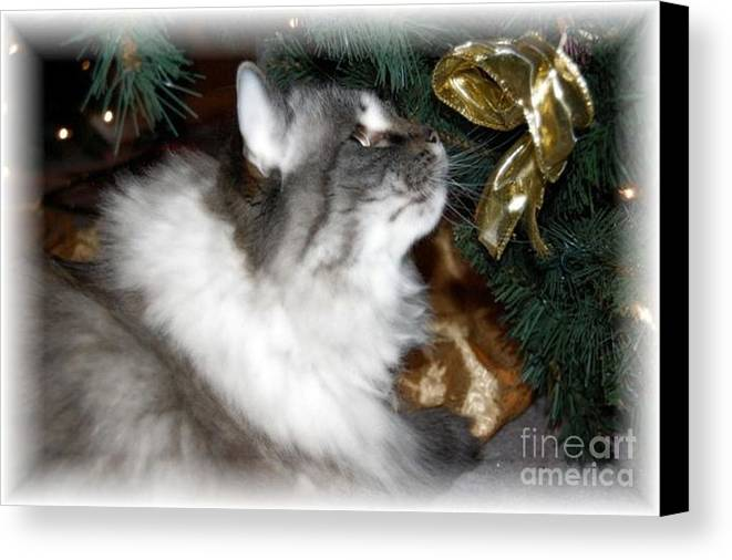 Christmas Canvas Print featuring the photograph Christmas Kitty by Debbi Granruth