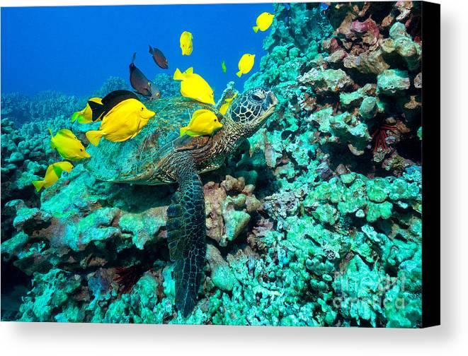 Green Sea Turtle Canvas Print featuring the photograph Cleaners by Aaron Whittemore