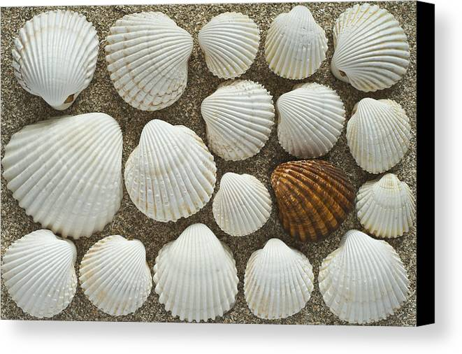 Cockles Canvas Print featuring the photograph Cockles Collection by Igor Voljch