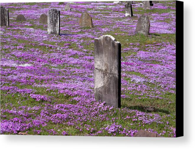 Tombstone Canvas Print featuring the photograph Colonial Tombstones Amidst Graveyard Phlox by John Stephens