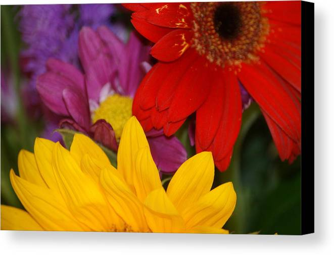 Flower Canvas Print featuring the photograph Colorful Flowers by Liz Vernand