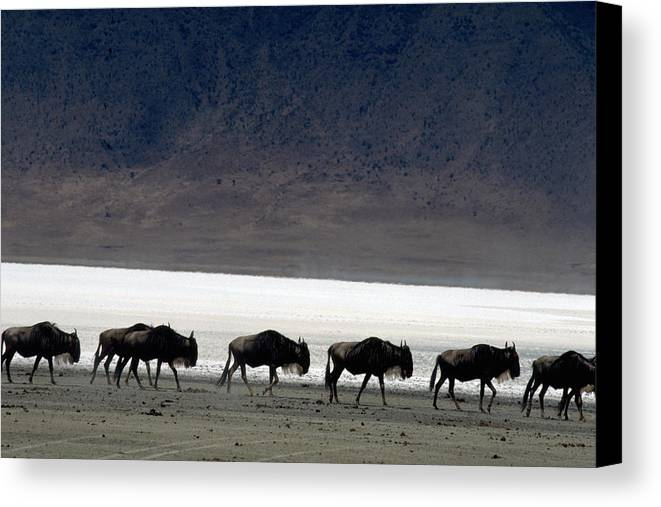 Wildlife Canvas Print featuring the photograph Commuters by Carl Purcell
