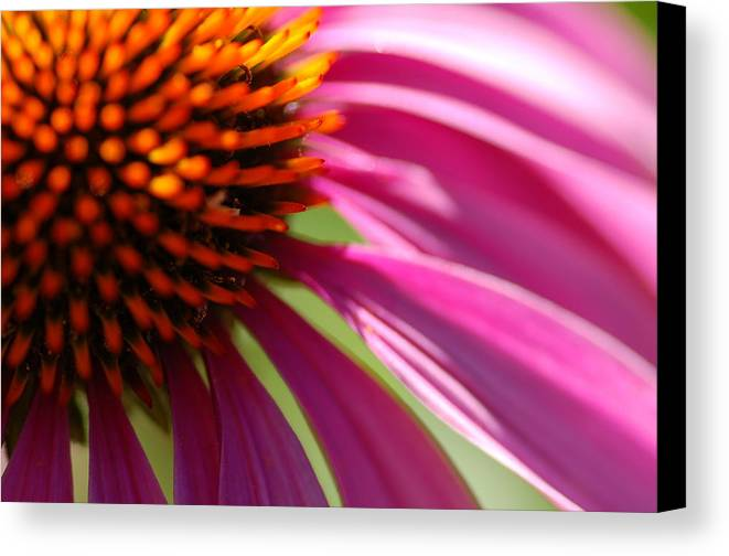 Macro Canvas Print featuring the photograph Cone Flower by Scott Gould