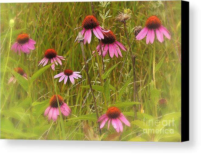 Landscape Canvas Print featuring the photograph Cone Flowers In The Meadow by Neil Doren