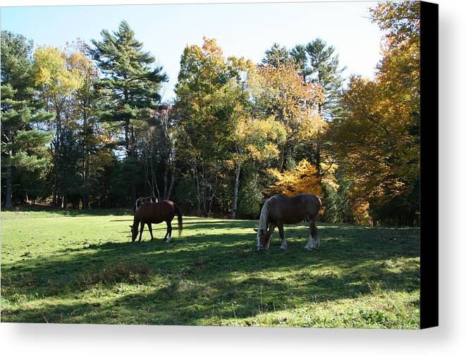 Landscape Canvas Print featuring the photograph Contentment by Doug Mills