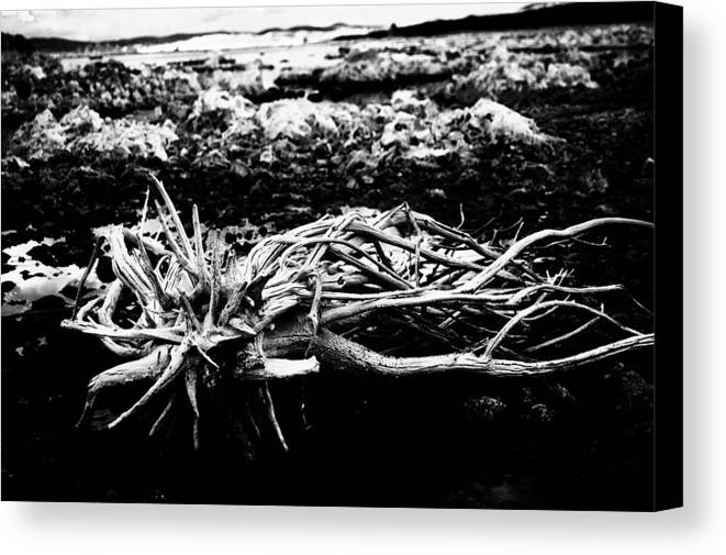Nature Canvas Print featuring the photograph Contrast by Jessica Roth