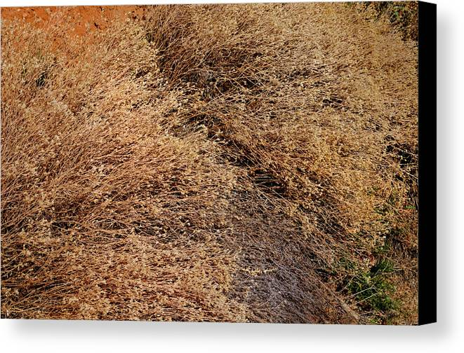 Landscape Canvas Print featuring the photograph Coyote Brush by Ron Cline