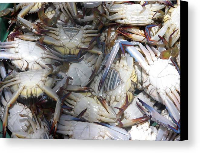 Photographer Canvas Print featuring the photograph Crabs by Jez C Self