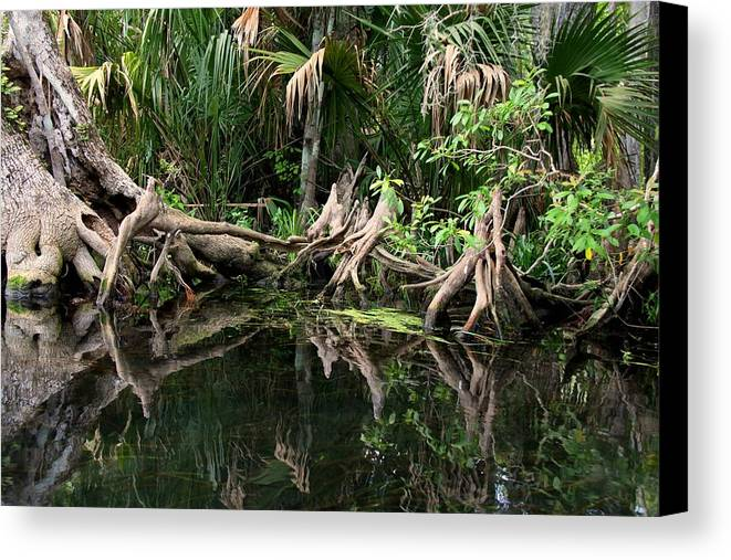 Cypress Tree Canvas Print featuring the photograph Cypress Swamp by Barbara Bowen