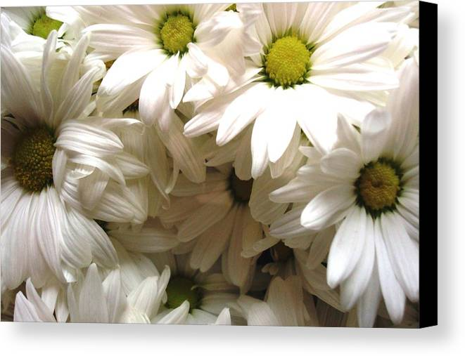 Flowers Canvas Print featuring the photograph Daisies Make Me Smile by Laura Grisham