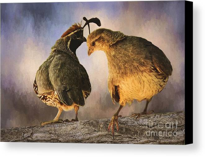 Dance Of The Quail Canvas Print featuring the photograph Dance Of The Quail by Priscilla Burgers