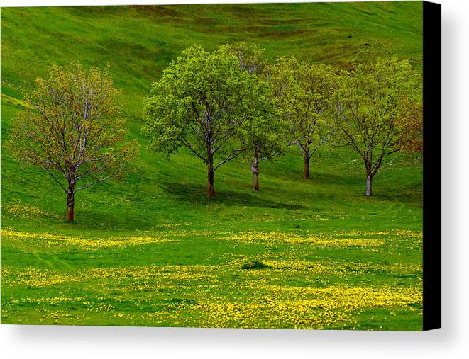 Spring Canvas Print featuring the photograph Dandy by Jenny May