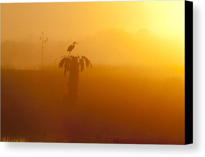 Dawn Canvas Print featuring the photograph Dawn by Bill Linhares