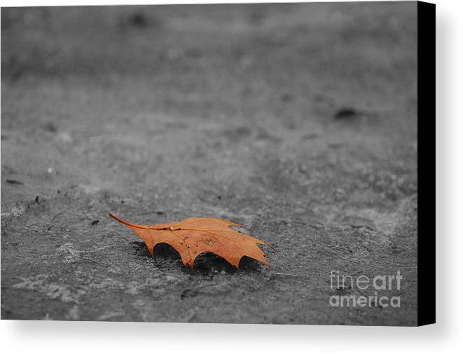 Autumn Canvas Print featuring the photograph Dead Leaf by Evia Nugrahani Koos