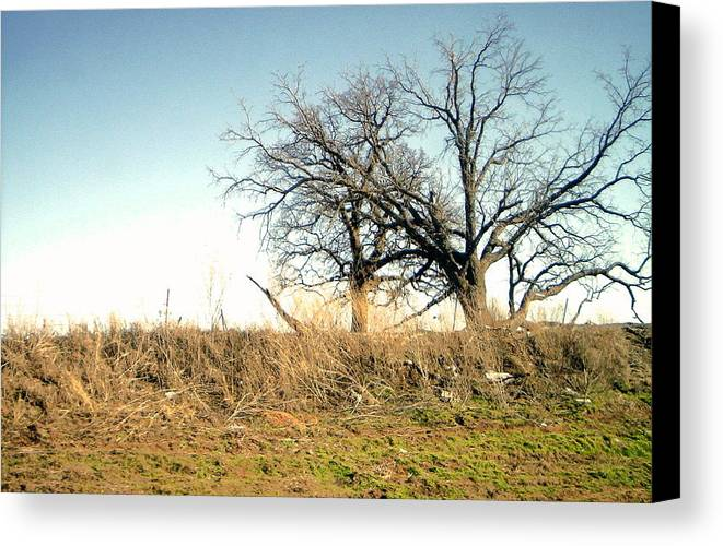 Canvas Print featuring the photograph Dead Tree by Chad Taber