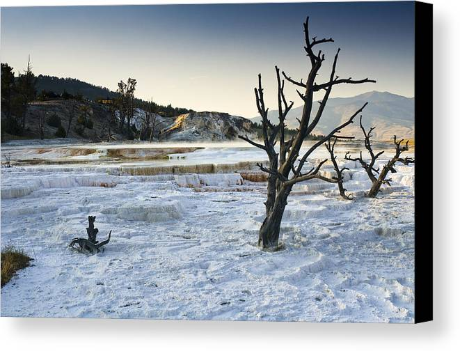 Mammoth Hot Springs Canvas Print featuring the photograph Dead Wood Springs by Chad Davis