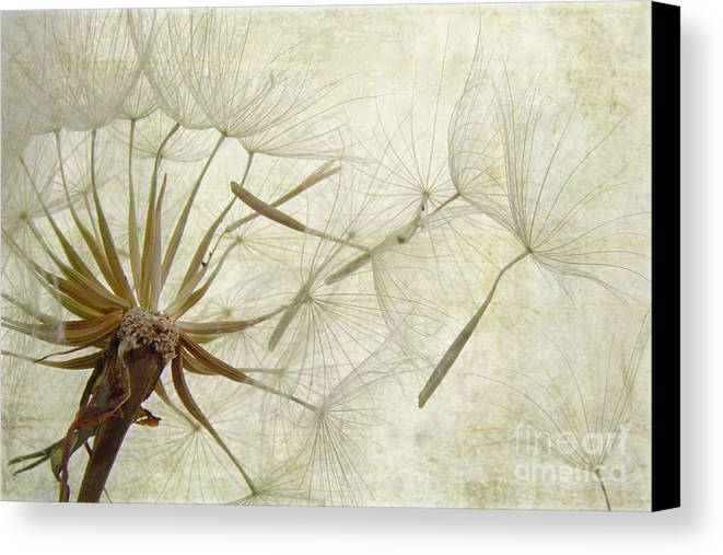 Dandelion Canvas Print featuring the photograph Dearly Departed by Jan Piller