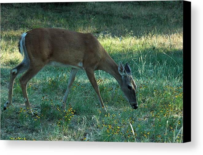 Deer Canvas Print featuring the photograph Deer Fields by Teresa Blanton