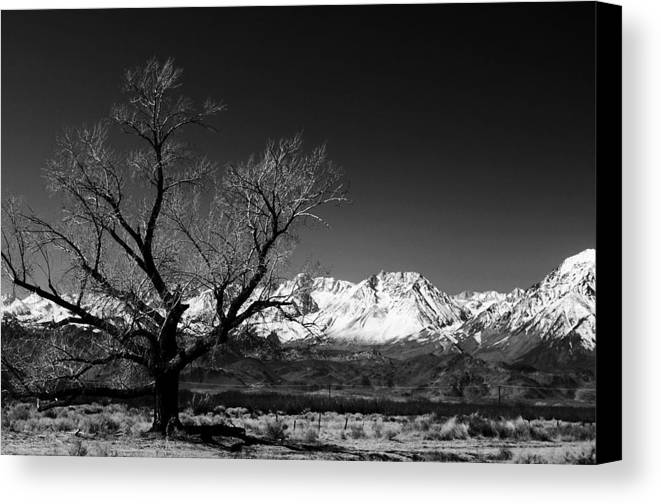 Black Adn White Canvas Print featuring the photograph Desolation by Jessica Roth