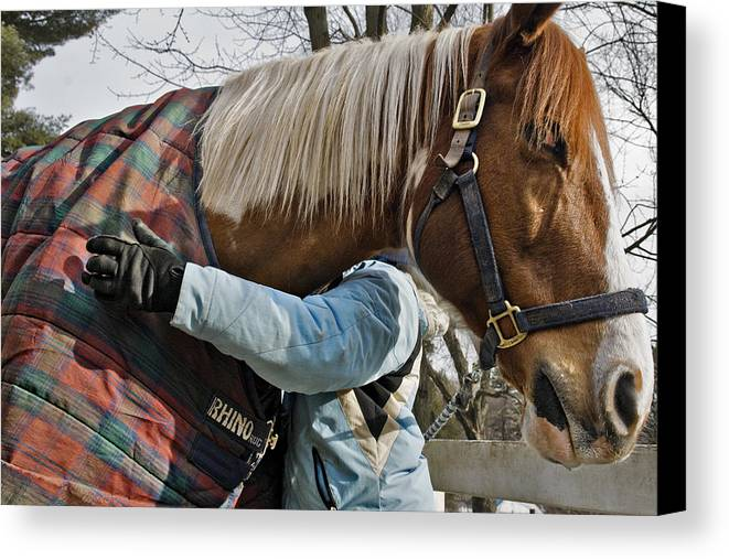 Horse Canvas Print featuring the photograph Devotion by Jack Goldberg