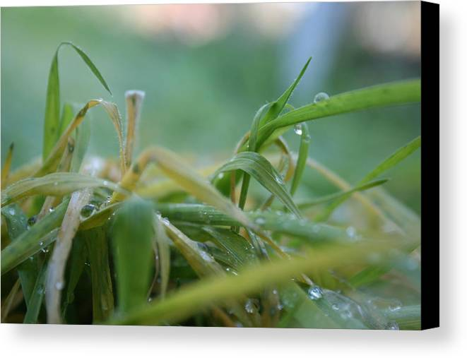 Dew Canvas Print featuring the photograph Dew Grass by Joshua Sunday