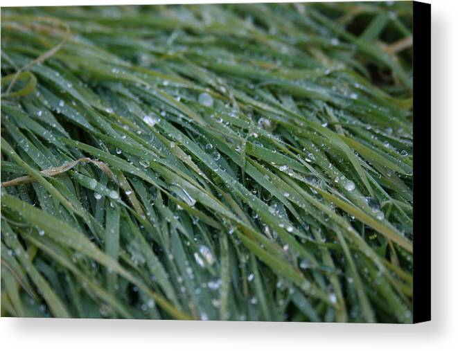 Dew Canvas Print featuring the photograph Dew Grass Two by Joshua Sunday
