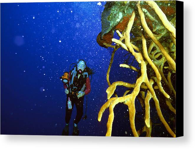 Dive Canvas Print featuring the photograph Diving The Wall At Little Cayman by Carl Purcell