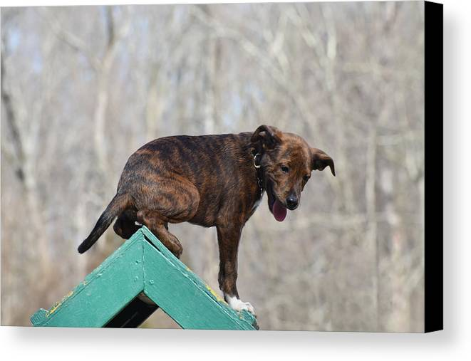 Dog Canvas Print featuring the photograph Dog 388 by Joyce StJames