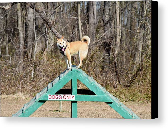 Dog Canvas Print featuring the photograph Dog 389 by Joyce StJames