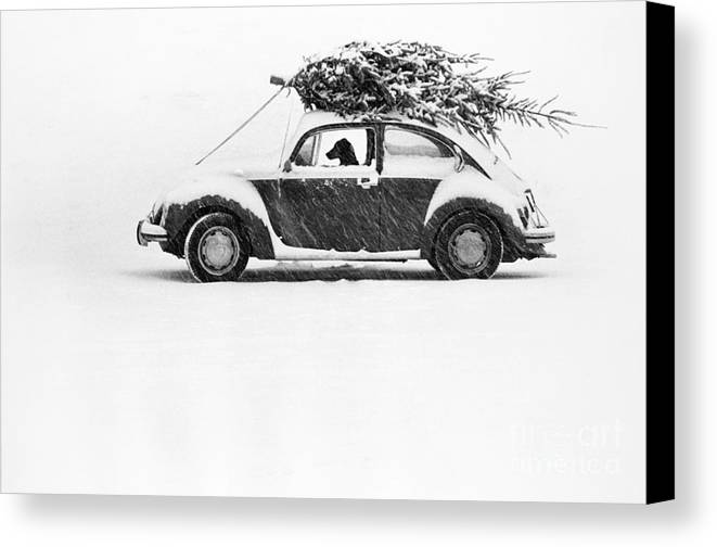 Animal Canvas Print featuring the photograph Dog In Car by Ulrike Welsch and Photo Researchers