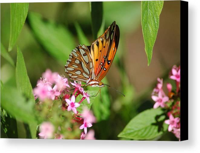 Butterflies Canvas Print featuring the photograph Double Dip by Robert Anschutz