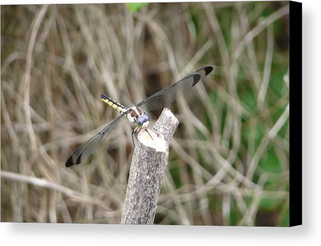 Wildlife Canvas Print featuring the photograph Dragonfly I by Kathy Schumann