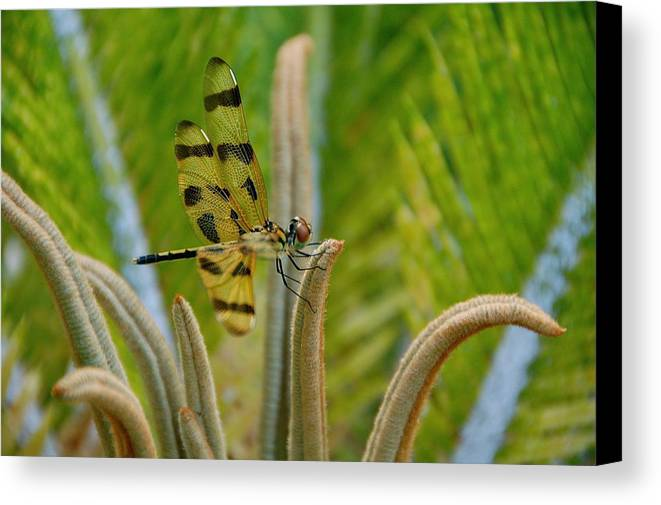 Dragonfly Nature Canvas Print featuring the photograph Dragonfly by Lucrecia Cuervo