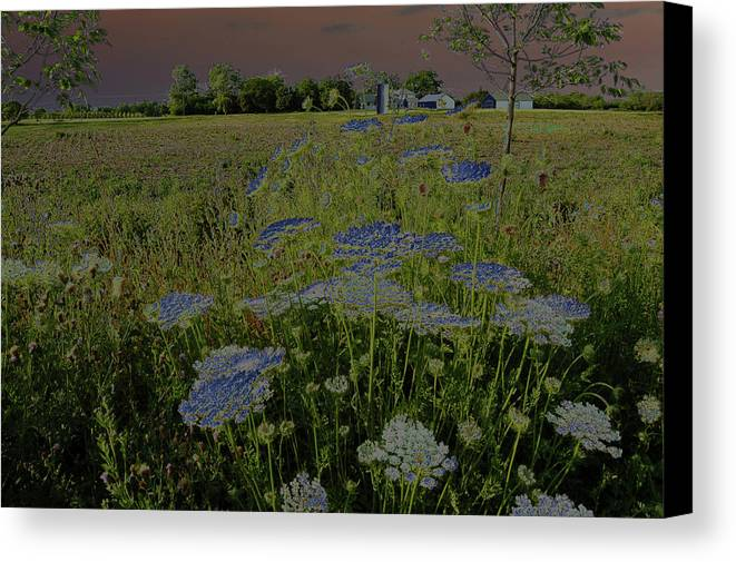Photograph Canvas Print featuring the photograph Dreaming Of Queen Annes Lace by Suzanne Gaff