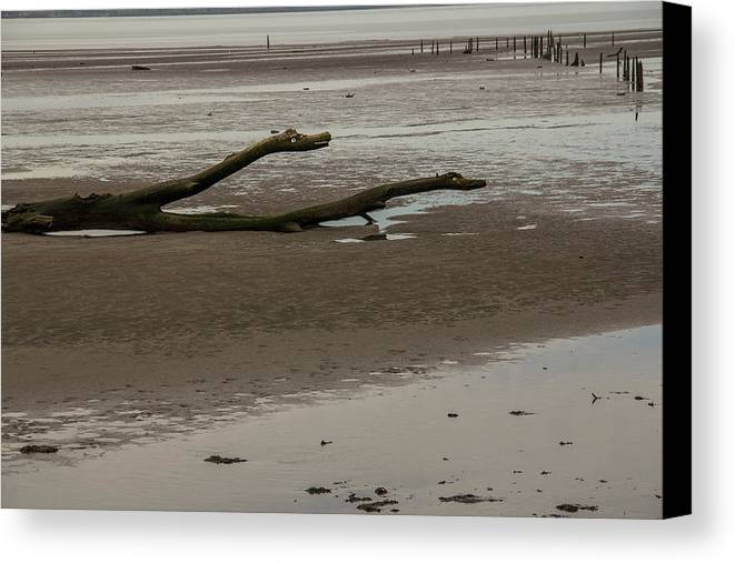 Driftwood Canvas Print featuring the photograph Driftwood Serpent by Roger Patterson