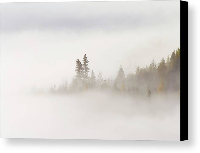 Fog Canvas Print featuring the photograph Emergence by Mike Dawson