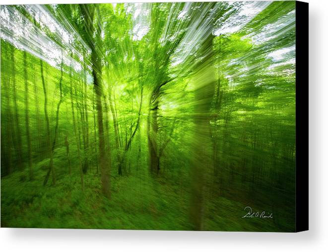 Landscape Canvas Print featuring the photograph Enchanted Forest 1 by Frederic A Reinecke