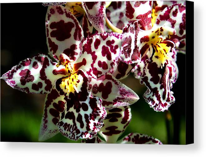 Ribet Canvas Print featuring the photograph Exotic Orchids Of C Ribet by C Ribet