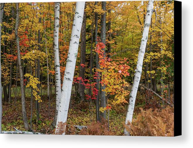 Canvas Print featuring the photograph Fall Color by Paul Schultz