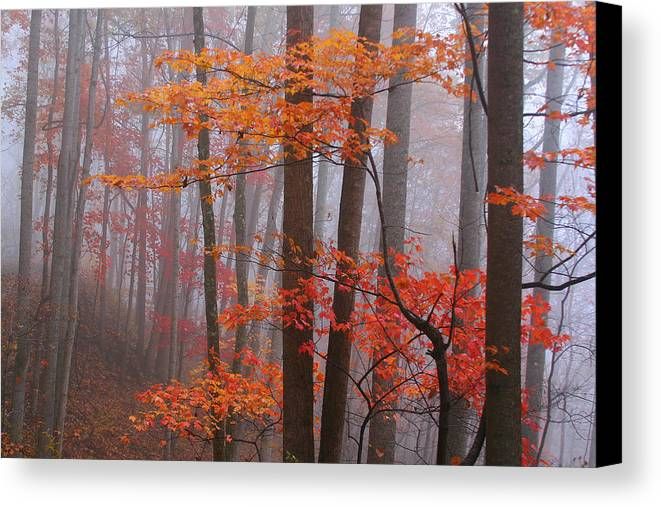 Landscape Canvas Print featuring the photograph Fall Fog. by Itai Minovitz