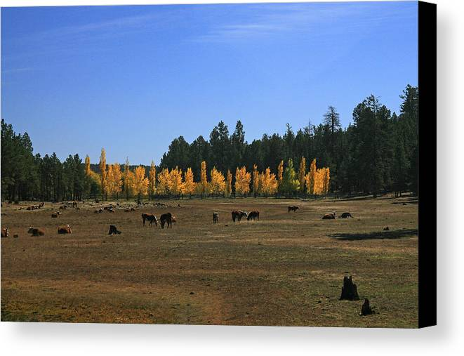 Landscape Canvas Print featuring the photograph Fall In Line by Randy Oberg