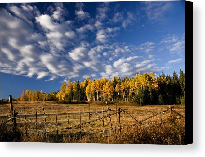 Fall Colours Canvas Print featuring the photograph Fall In The Cariboo by Detlef Klahm