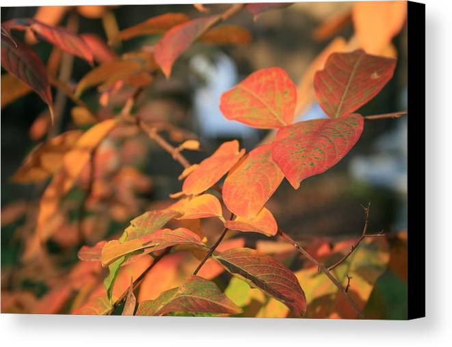 Leaves Canvas Print featuring the photograph Fall Leaves by Linda Ebarb