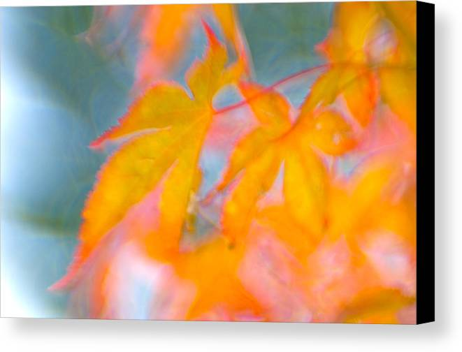 Fall Canvas Print featuring the photograph Fall Leaves by Silke Magino