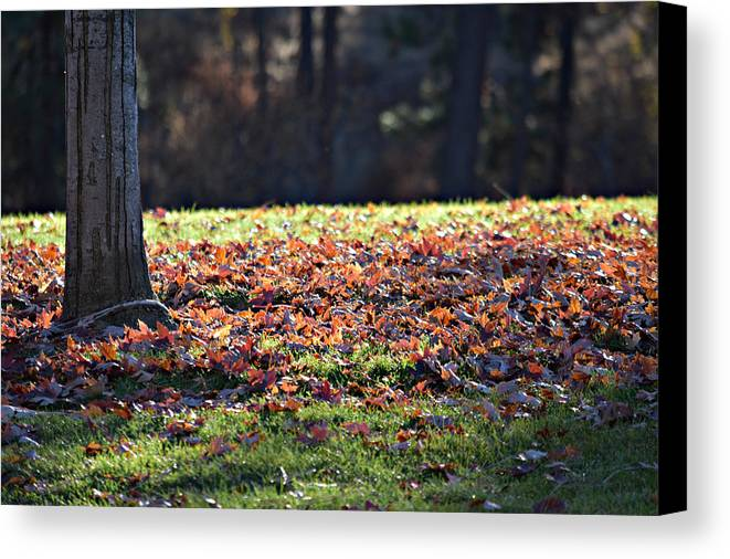 Canvas Print featuring the photograph Fall by Valerie Zebroski