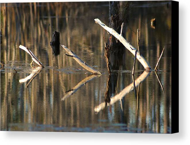 Abstract Canvas Print featuring the photograph Fallen Trees by Lori Mellen-Pagliaro