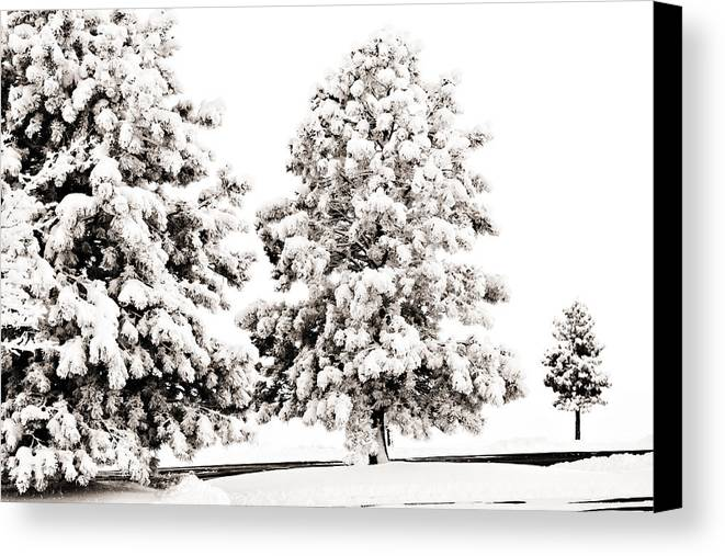 Trees Canvas Print featuring the photograph Family Of Trees by Marilyn Hunt