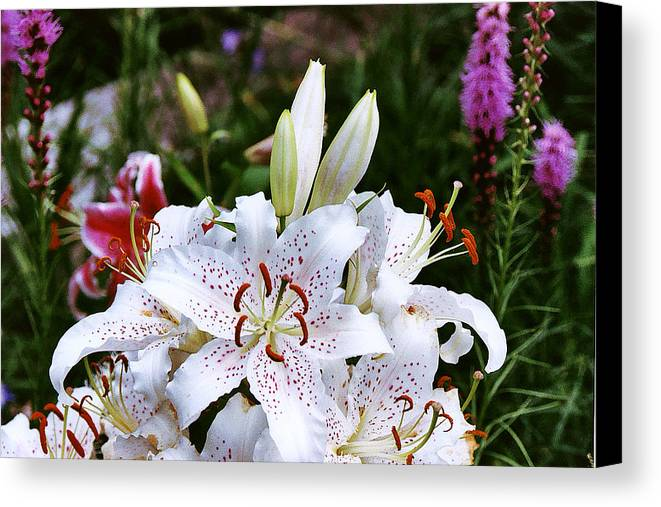 Summer Canvas Print featuring the photograph Fancy White Lily In Garden by Roger Soule