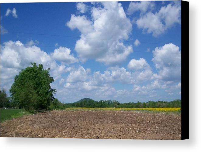 Nature Canvas Print featuring the photograph Field by Karen Thompson